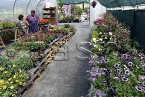 VYŠNÝ ŽIPOV: Festival kvetov a umenia predstavuje možnosti úpravy exteriérov
