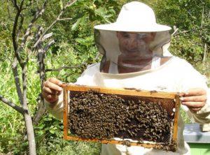 SEDLISKÁ: Včelár spod hradu Čičva hodnotí aktuálny rok pozitívne